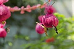 Olika fjärilar är matning, genom att använda rosa påsar Arkivbild