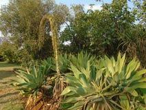 Olika gröna växter i solljus fotografering för bildbyråer