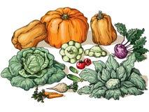 Olika grönsaker Vektor Illustrationer