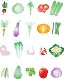 Olika grönsaker från den tropiska lantgården - vektorillustration vektor illustrationer