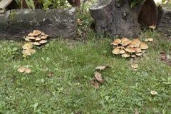 Olika grupper av champinjoner Arkivbild