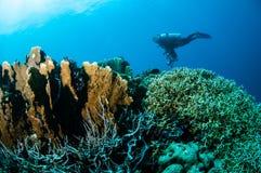 Olika hårda korallrever i Gorontalo, Indonesien royaltyfri fotografi