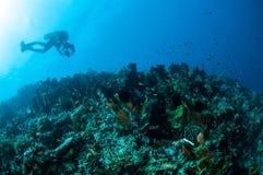 Olika hårda korallrever i Gorontalo, Indonesien arkivbild