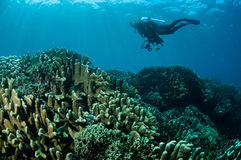 Olika hårda korallrever i Gorontalo, Indonesien Arkivfoto