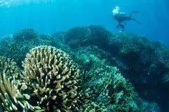 Olika hårda korallrever i Gorontalo, Indonesien Arkivfoton