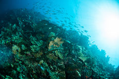 Olika hårda korallrever i Gorontalo, Indonesien undervattens- foto Arkivfoton