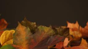 Olika höstsidor mot en mörk bakgrund royaltyfri bild