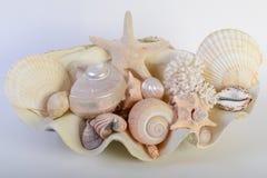 olika havsskal Arkivbilder