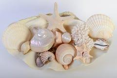 olika havsskal Fotografering för Bildbyråer