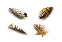 Olika havsskal Arkivfoto