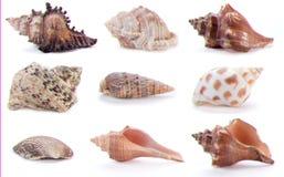 olika havsskal Arkivfoton