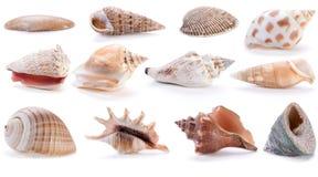 olika havsskal Royaltyfri Bild