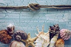 Olika havsskal för gräns Arkivfoto