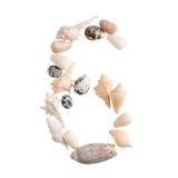 Olika havsskal numrerar 6 på isolerad vit bakgrund Arkivfoto