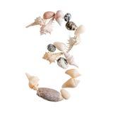 Olika havsskal numrerar 3 på vit bakgrund Arkivfoton