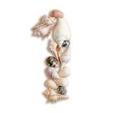 Olika havsskal numrerar 1 på vit bakgrund Royaltyfri Fotografi
