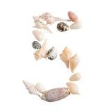 Olika havsskal numrerar 5 på vit bakgrund Royaltyfria Foton