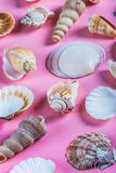 Olika havsskal på en rosa bakgrund Arkivbilder