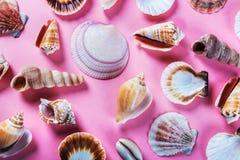 Olika havsskal på en rosa färg Arkivfoto
