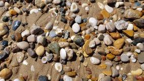 Olika havsstenar och snäckskal på den våta strandsanden Royaltyfri Fotografi
