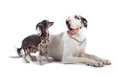 olika hundar Arkivfoton