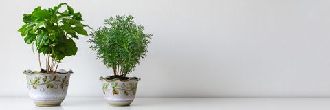 Olika husväxter i olika krukor mot den vita väggen Inomhus inlagd växtbakgrund Modern rumgarnering royaltyfria bilder