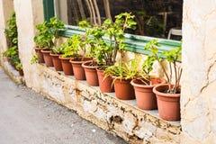 Olika inlagda växter och plantor nära blomsterhandlaren shoppar ingången Arkivbild