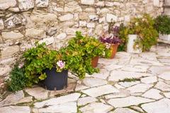 Olika inlagda växter och plantor nära blomsterhandlaren shoppar ingången Arkivbilder