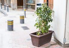 Olika inlagda växter och plantor nära blomsterhandlaren shoppar ingången Fotografering för Bildbyråer