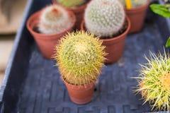 Olika inlagda växter och plantor nära blomsterhandlaren shoppar ingången Royaltyfri Fotografi