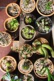 Olika kaktusväxter, bästa sikt Arkivfoton