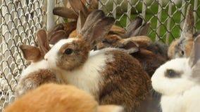 Olika kaniner för ultrarapid i bur stock video