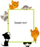 olika kattungar placerar din text Royaltyfri Foto