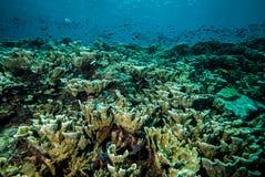 Olika korallrever och fiskar i Derawan, Kalimantan, Indonesien undervattens- foto Arkivbilder