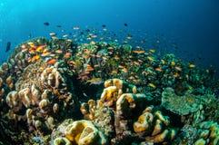 Olika korallrever och fiskar i Gili, Lombok, Nusa Tenggara Barat, Indonesien undervattens- foto Royaltyfria Bilder