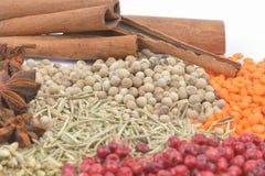 Olika kryddor och örter Royaltyfri Fotografi
