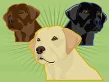 olika labrador retrievers Vektor Illustrationer