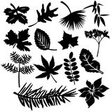 olika leafs royaltyfri fotografi