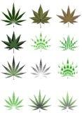 olika leafstilar för cannabis Royaltyfria Bilder