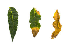 olika leaves Royaltyfri Foto