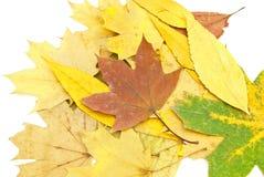 olika leaves för bakgrundsfärg Royaltyfri Bild