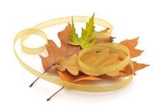 olika leaves för höst Royaltyfri Bild