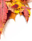 olika leaves för höst Royaltyfria Bilder