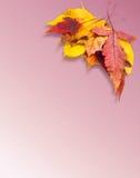 olika leaves för höst Royaltyfri Foto