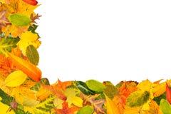 olika leaves för höst många Arkivbilder