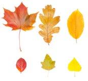 olika leaves för samling Arkivbild