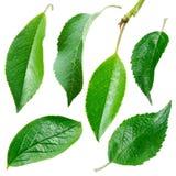 olika leaves Ny samling på vit bakgrund Arkivbilder