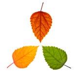 olika leaves tre Royaltyfri Foto