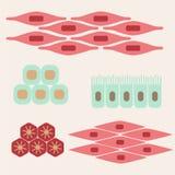 Olika mänskliga silkespappertyper Royaltyfria Bilder