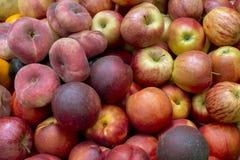 olika nya frukter Fotografering för Bildbyråer